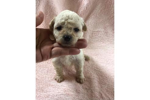 ミックスの子犬(ID:1271311098)の3枚目の写真/更新日:2020-12-12