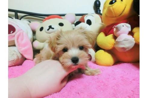 ミックスの子犬(ID:1272311031)の2枚目の写真/更新日:2021-04-09