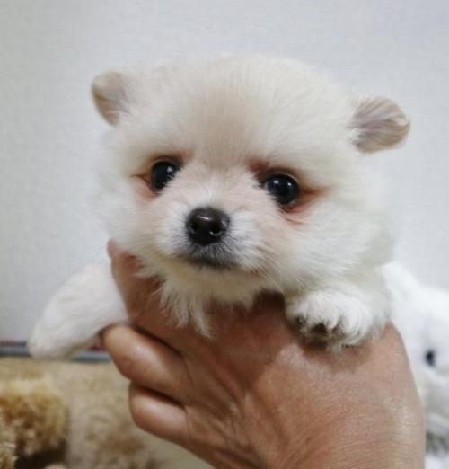 ミックスの子犬(ID:1273211002)の1枚目の写真/更新日:2019-06-06