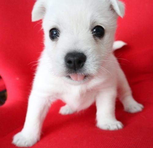 ミックスの子犬(ID:1273211018)の1枚目の写真/更新日:2019-05-13