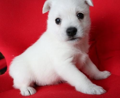 ミックスの子犬(ID:1273211018)の2枚目の写真/更新日:2019-05-13