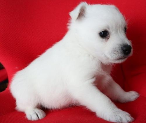 ミックスの子犬(ID:1273211018)の3枚目の写真/更新日:2019-05-13