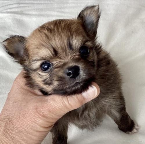 ミックスの子犬(ID:1273211024)の1枚目の写真/更新日:2020-08-26