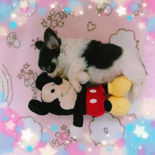 ミックスの子犬(ID:1273311001)の5枚目の写真/更新日:2018-07-22