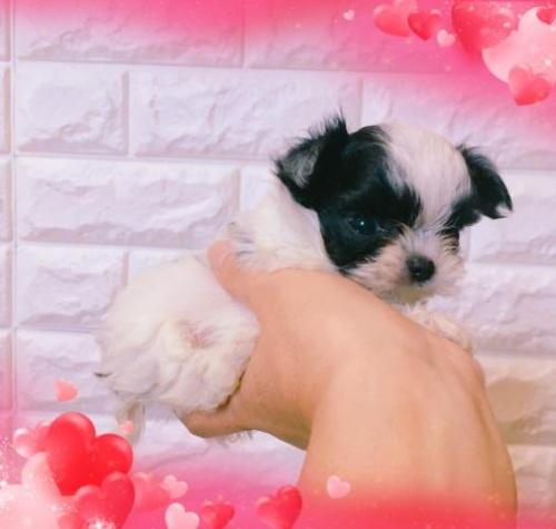 ミックスの子犬(ID:1273311002)の3枚目の写真/更新日:2018-07-16