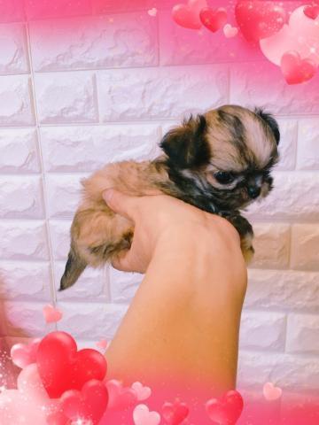 ミックスの子犬(ID:1273311003)の4枚目の写真/更新日:2018-07-16