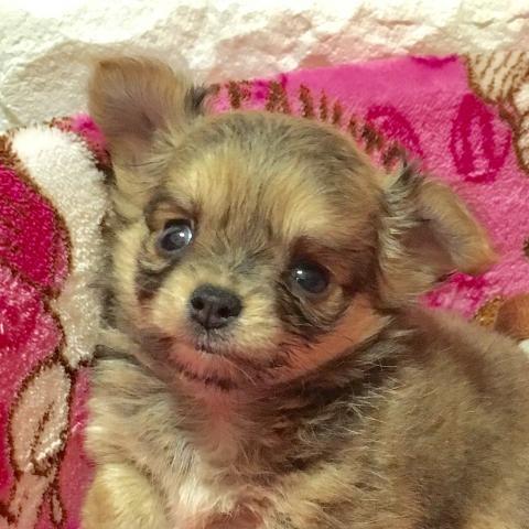 ミックスの子犬(ID:1273311006)の1枚目の写真/更新日:2018-09-10