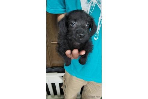 ミックスの子犬(ID:1273811042)の1枚目の写真/更新日:2021-08-19