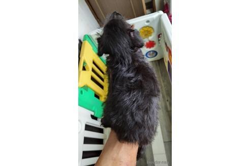 ミックスの子犬(ID:1273811042)の2枚目の写真/更新日:2021-08-19