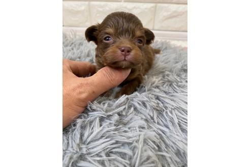ミックスの子犬(ID:1273911002)の1枚目の写真/更新日:2018-08-10