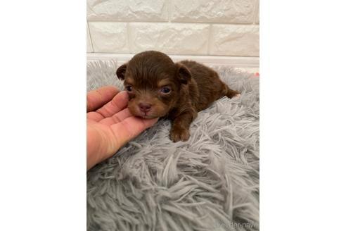 ミックスの子犬(ID:1273911002)の3枚目の写真/更新日:2018-08-10