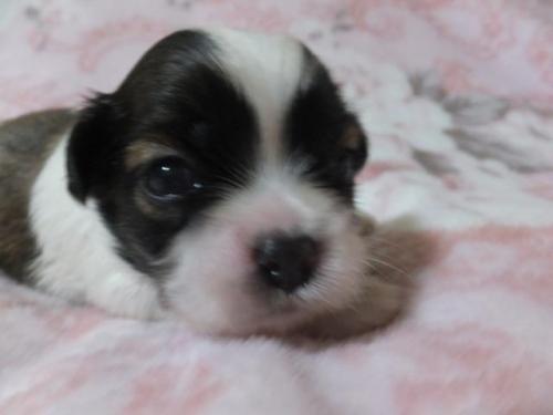 ミックスの子犬(ID:1273911003)の3枚目の写真/更新日:2018-08-10