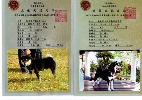 柴犬の子犬(ID:1274311008)の4枚目の写真/更新日:2019-04-25