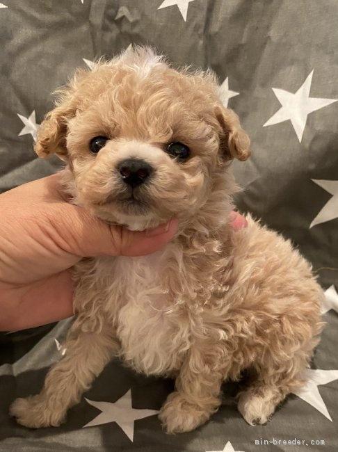 ミックスの子犬(ID:1279311002)の1枚目の写真/更新日:2021-04-28