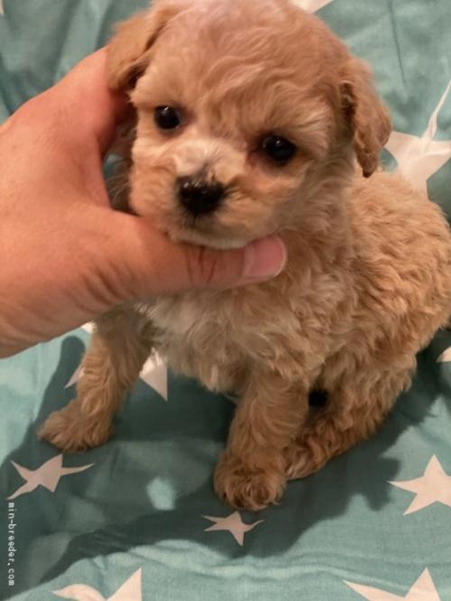ミックスの子犬(ID:1279311016)の3枚目の写真/更新日:2021-04-28