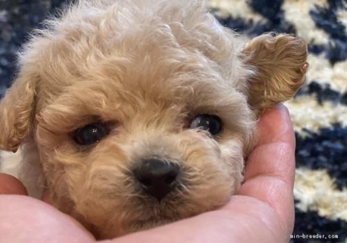 ミックスの子犬(ID:1279311026)の2枚目の写真/更新日:2021-04-28