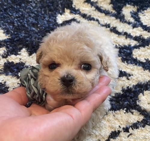 ミックスの子犬(ID:1279311026)の3枚目の写真/更新日:2021-04-28
