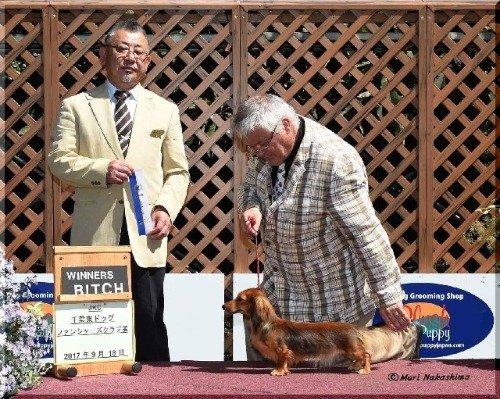 カニンヘンダックスフンド(ロング)の子犬(ID:1282911002)の5枚目の写真/更新日:2021-03-09