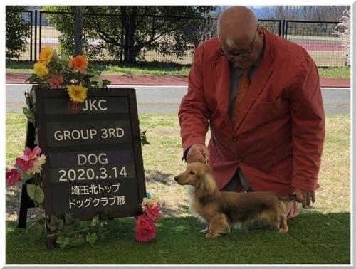 カニンヘンダックスフンド(ロング)の子犬(ID:1282911002)の6枚目の写真/更新日:2021-03-09