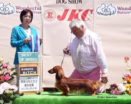 スタンダードダックスフンド(ロング)の子犬(ID:1282911008)の8枚目の写真/更新日:2021-04-23