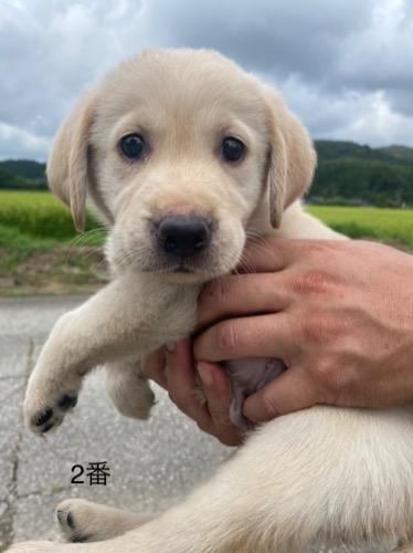 ミックスの子犬(ID:1283111015)の1枚目の写真/更新日:2021-08-03
